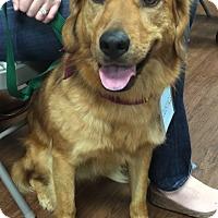 Adopt A Pet :: Justice - BIRMINGHAM, AL