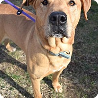 Adopt A Pet :: Max D-70629 - Westampton, NJ