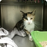 Adopt A Pet :: cynthia - Muskegon, MI