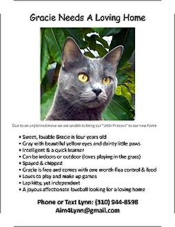 British Shorthair Cat for adoption in Lomita, California - Gracie