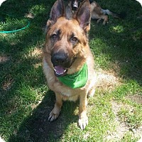 Adopt A Pet :: Optimus - Courtesy Listing - Rootstown, OH