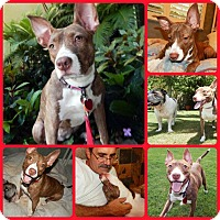Adopt A Pet :: Lovebug - Davenport, FL