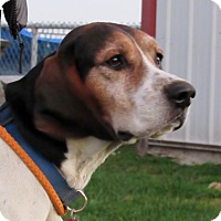 Treeing Walker Coonhound Mix Dog for adoption in Grinnell, Iowa - Edgar Allen