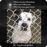 Adopt A Pet :: RJ - Sautee, GA