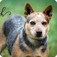 Adopt A Pet :: Kiah - Joliet, IL