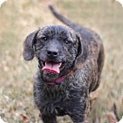 Adopt A Pet :: MISS GENTRY
