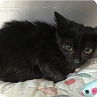 Adopt A Pet :: Olivia - Covington, LA