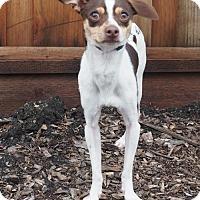 Adopt A Pet :: Skippy - Palo Alto, CA
