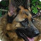 Adopt A Pet :: Max 3629 / 3923