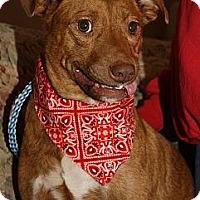 Adopt A Pet :: Tasia - Bardonia, NY