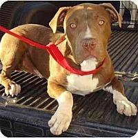 Adopt A Pet :: BRUNO - Fowler, CA