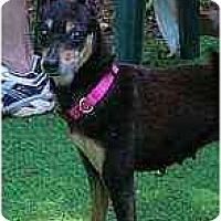 Adopt A Pet :: Sasha - Summerville, SC
