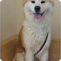 Adopt A Pet :: Charlotte - Hayward, CA