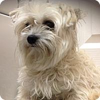 Adopt A Pet :: Rna - Clermont, FL