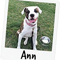 Adopt A Pet :: Ann - McCalla, AL