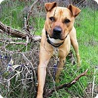 Adopt A Pet :: Luke - Lompoc, CA