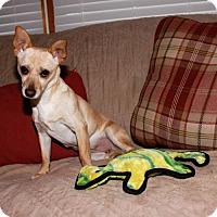 Adopt A Pet :: Jasmine - Keyport, NJ