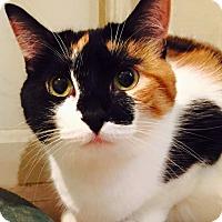 Adopt A Pet :: Jazz - Columbia, MD