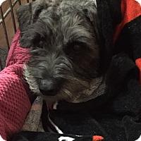 Adopt A Pet :: Iggy - Laurel, MD