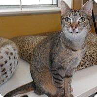 Adopt A Pet :: Libbie - Houston, TX
