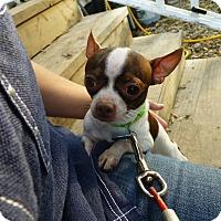 Adopt A Pet :: Prince - Wyanet, IL