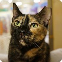 Adopt A Pet :: Marble Mae - Monroe, GA