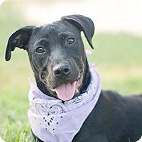 Adopt A Pet :: Solo - Houston, TX