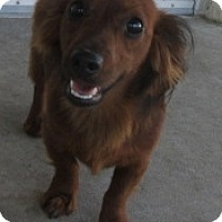 Adopt A Pet :: Bo Jangles - Humble, TX