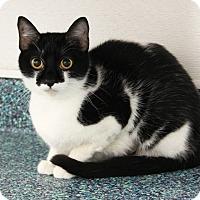 Adopt A Pet :: Lil Debbie - Long Beach, CA