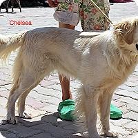 Adopt A Pet :: Chelsea - BIRMINGHAM, AL