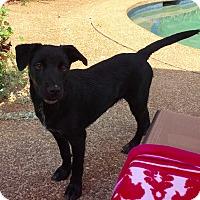 Adopt A Pet :: OCTAVIA - Fishkill, NY