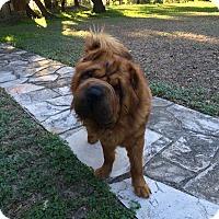 Adopt A Pet :: Oso - Houston, TX