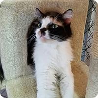 Adopt A Pet :: Lola - Fallbrook, CA