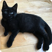 Adopt A Pet :: Jughead - Toronto, ON