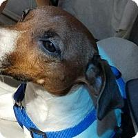 Adopt A Pet :: Robin - Sarasota, FL