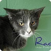 Adopt A Pet :: Racer - Hamilton, ON