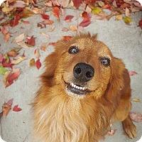 Adopt A Pet :: Auggie - Salt Lake City, UT