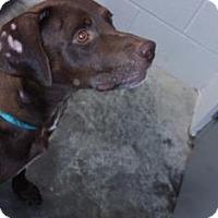 Adopt A Pet :: Roxy - Paducah, KY