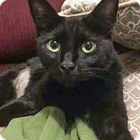 Adopt A Pet :: Bobbi - Arlington, TX