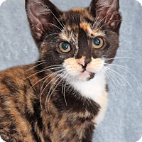 Adopt A Pet :: Heidi - Encinitas, CA