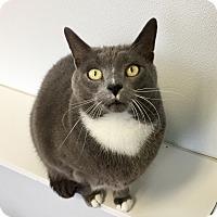 Adopt A Pet :: Rudy - Greensburg, PA