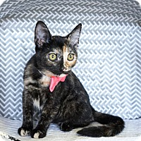 Adopt A Pet :: VIVIAN - Montclair, CA