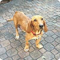 Adopt A Pet :: Kika - Houston, TX