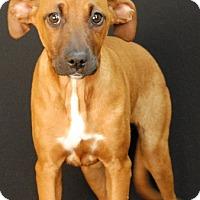 Adopt A Pet :: Lullaby - Newland, NC