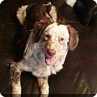 Adopt A Pet :: Teddy - Clackamas, OR