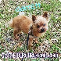 Adopt A Pet :: Garrett - Wellington, FL