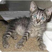 Adopt A Pet :: Leland - Davis, CA