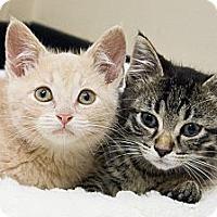 Adopt A Pet :: Kane & Bolland - Chicago, IL