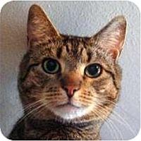 Adopt A Pet :: Larry - New York, NY