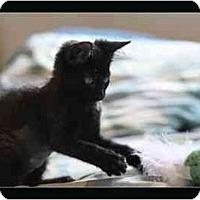 Adopt A Pet :: Daisy - Davis, CA